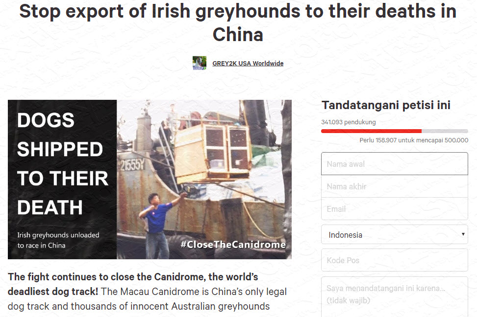 irish-greyhounds-petition